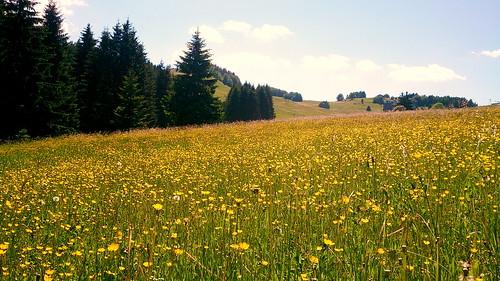 summer blossom blossoms slovakia donovaly
