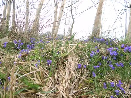 Violets Overton Circular