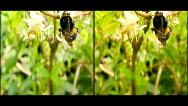 Bumble Bee - 3d movie clip -  crossview
