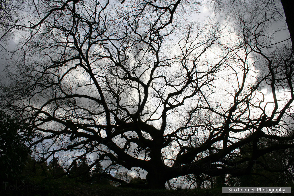Risultati immagini per albero stregato