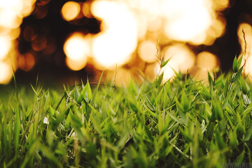 light plant green nature grass canon eos dof bokeh 7d f2 135mm 135l f2l