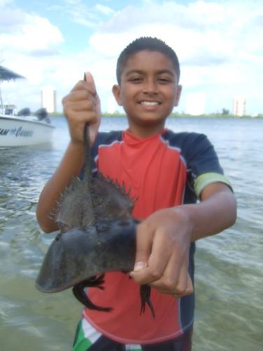 Rujul finds a horseshoe crab