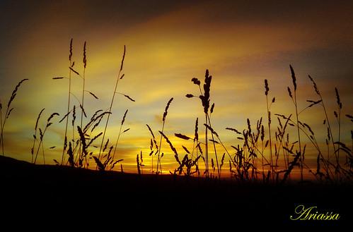 summer sky contraluz atardecer sundown galicia verano campo aestrada yellowclouds