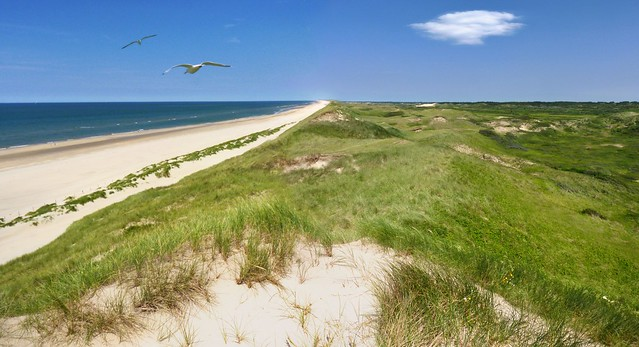 Tranquil undulating sands of the Dutch coastal  dunes