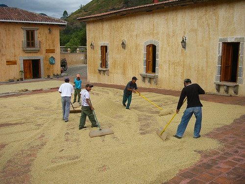 Drying Coffee beans   by shstern