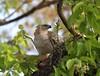 CHANGEABLE HAWK EAGLE by Arun Sundar