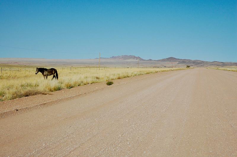 Pferd in Namibia