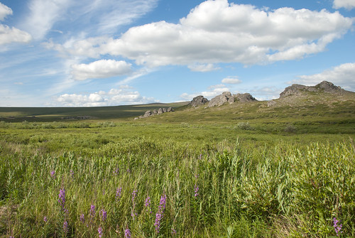 Summer landscape | by Bering Land Bridge National Preserve