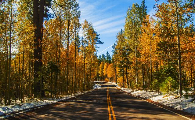 Fall Colours near lake Tahoe
