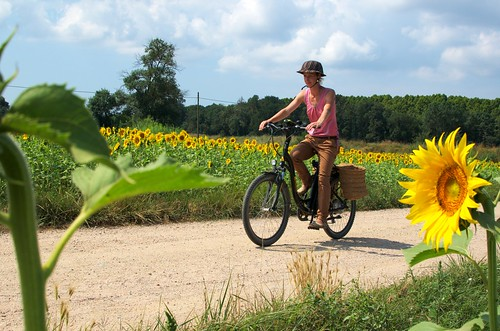 Sunflower biking | by utomjording