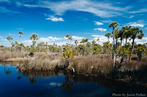 nature water sunshine creek landscape day florida outdoor scenic sunny trail palmtree polarizer tidal saltmarsh gulfcoast northflorida scenicdrive dixiecounty floridahikes coastalhammock dixiemainline shiredcreek