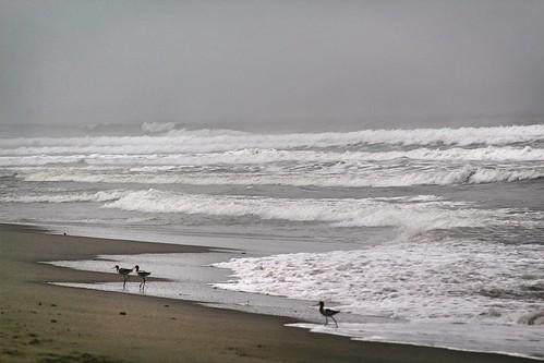 outside beach fog mist waves birds nature california socal ventura venturabeach mood