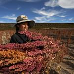 En la región intersalar de Bolivia, varias comunidades se dedican  a la producción de quinua, un cultivo de importancia económica para esta región. En varias comunidades existen organizaciones de productores; familias y vecinos que trabajan juntos  en otras tareas agrícolas  ayudándose con el Ayni y la minka para preparar los suelos, para la siembra y la cosecha.  El proyecto El clima cambia, cambia tú también identifica en Bolivia, Colombia, Ecuador y Perú, zonas de ecosistemas andino-amazónicos frágiles, donde las comunidades están buscando adaptarse al cambio climático. A través de testimonios y estudios de caso se identifican condiciones de vulnerabilidad y adaptación, para luego traducirlas en recomendaciones de políticas públicas y actividades de incidencia que ayuden a enfrentar impactos de estos fenómenos climáticos