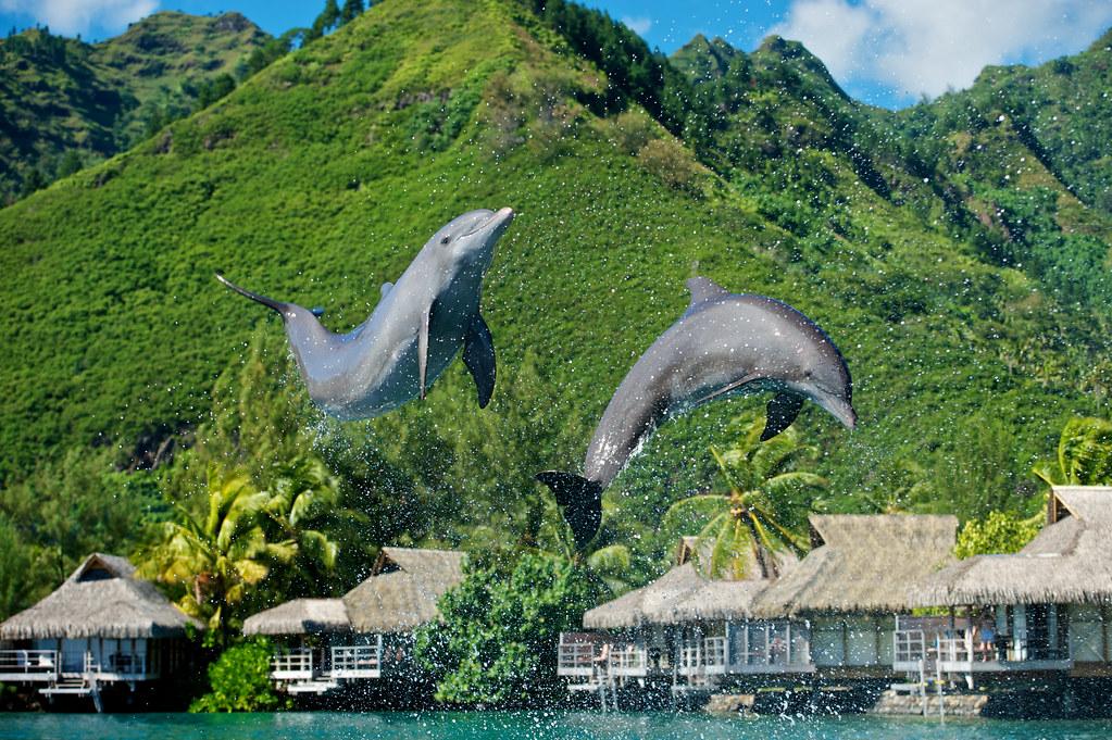 Intercontinental Moorea Resort Spa Moorea Dolphin Center