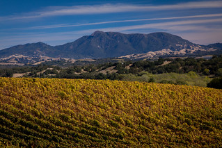 Williams Selyem Winery | by spencer341b
