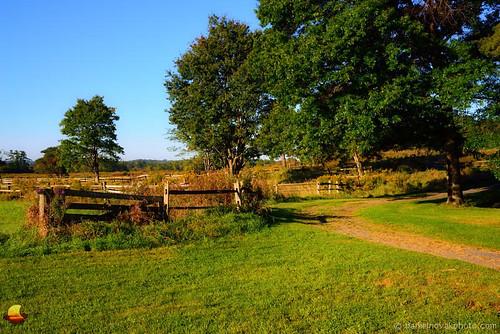 trees ny green field grass rural sunrise fence landscape outdoors buffalo path relaxing meadow bluesky hike trail dirtroad simple warmlight westernnewyork eastaurora knoxfarm etbtsy