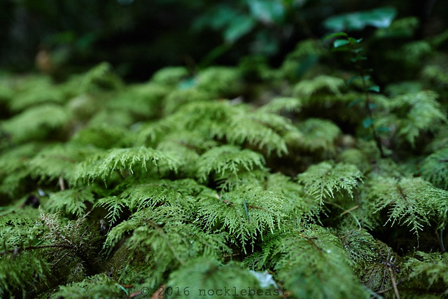 moss canopy