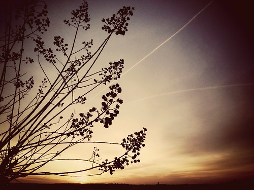 city morning light sky tree apple nature sunrise airport littlerock peaceful arkansas tranquil cellphonephoto crapemyrtle pulaskicounty antiquefilter centralarkansas iphone5 waltphotos lordwalt uploaded:by=flickrmobile flickriosapp:filter=antique