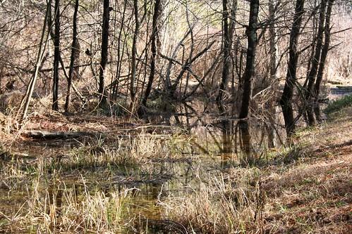 trees usa reflection grass puddle nc northcarolina boone 2012 views50 greenwaytrail