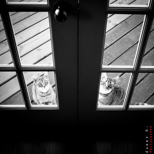 nightshots bellevue blackwhitephotos
