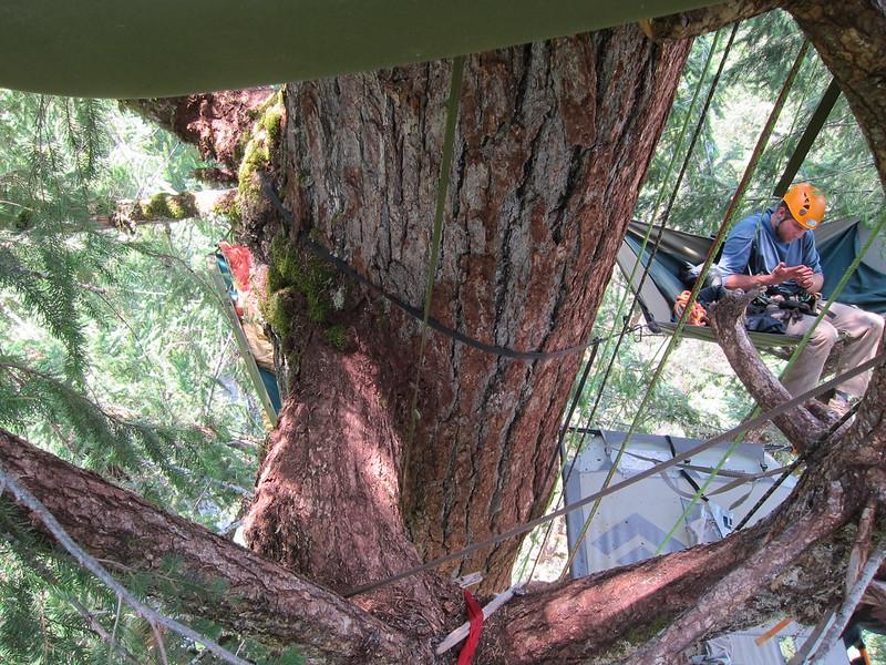 Tree climb and hike 021