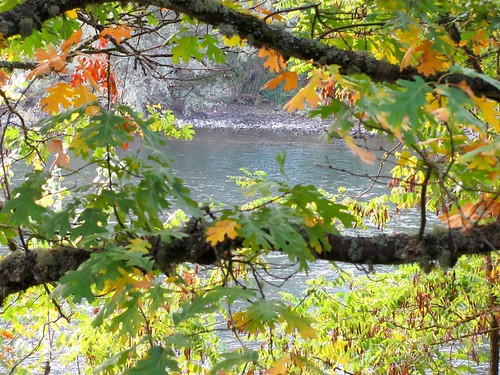 park fall oregon canon riverside canadiangeese grantspass sx120is