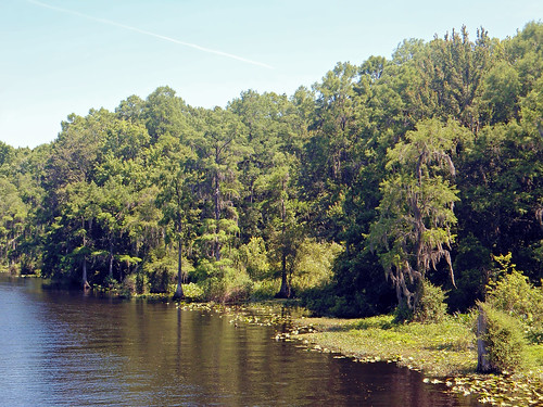 trees water forest river landscape scenery florida dunnellon