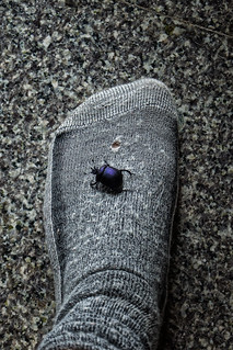 The Lesson of the Hissing Purple Beetle   by moonbird