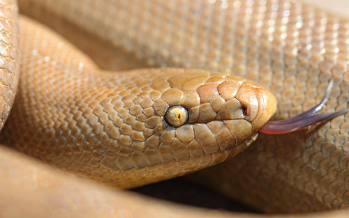 Rubber Boa | by phl_with_a_camera1