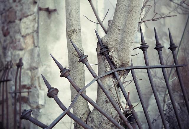 Symbiotic Fence (HFF)
