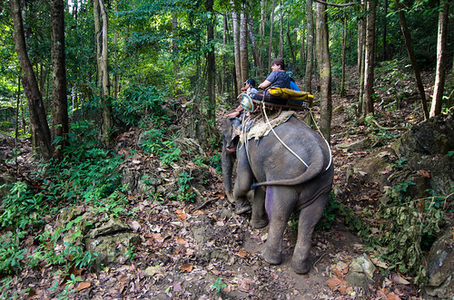 Elephant Trekking | by Mark Griffith