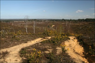 Thursley Common | by JonCombe