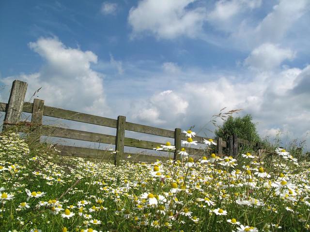Summer Fence