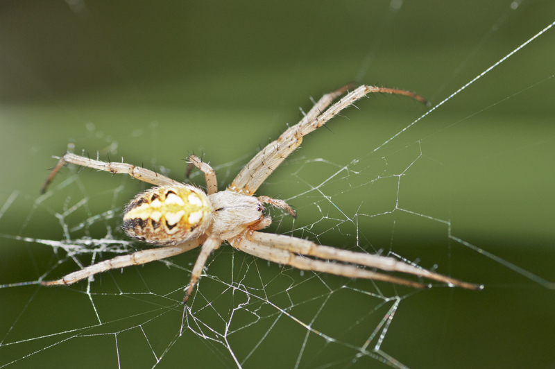 "¡""Spider"" ya está aquí!"