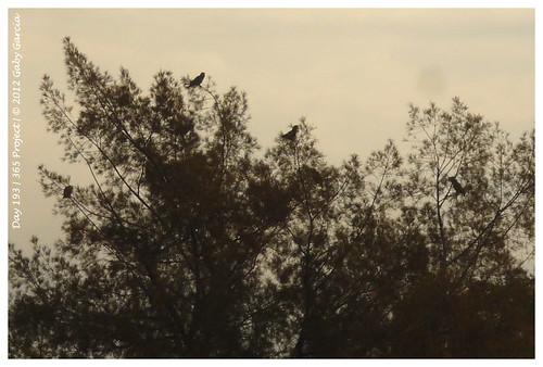 naturaleza nature lumix parrot panasonic loro perico cotorro sanluispotosí 365project