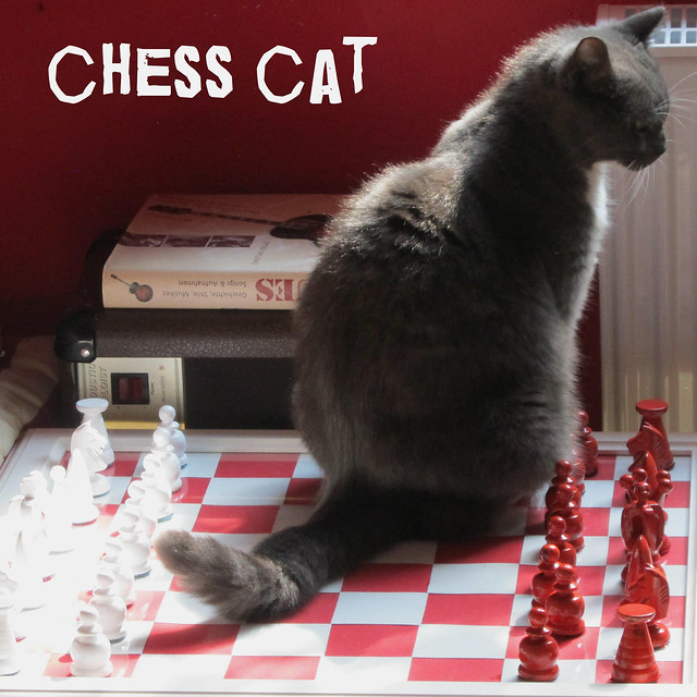 chess cat considering ...
