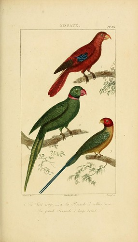 n178_w1150 | by BioDivLibrary