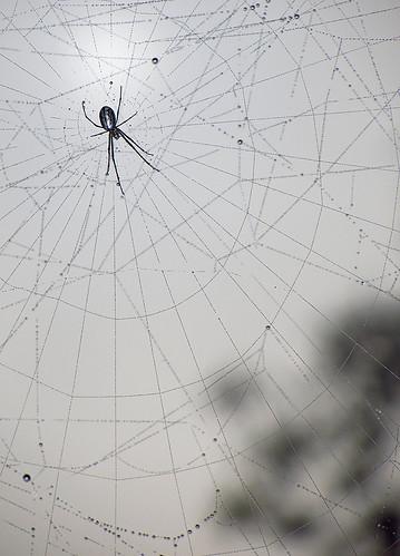 spider spiderweb myplace spidersense
