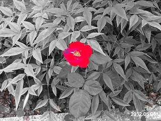 ColorSplash, Wondershare, PowerCam