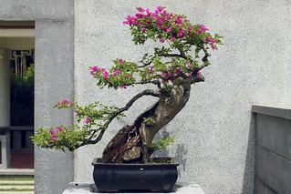 Bonsai | by chenilife