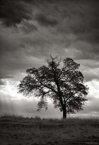 tree monochrome silhouette clouds blackwhite stormy