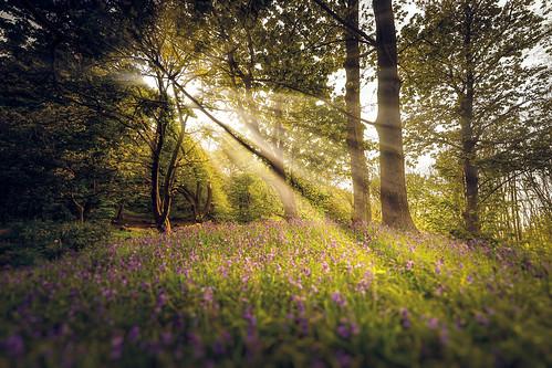 park uk flowers edinburgh unitedkingdom sony rays fe a7 samyang sonya7 samyang14mmf28 ravelstonpark