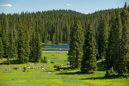 travel blue trees summer lake green water sunshine colorado serenity grandmesa