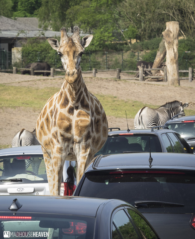 Safaripark Beekse Bergen - 0205