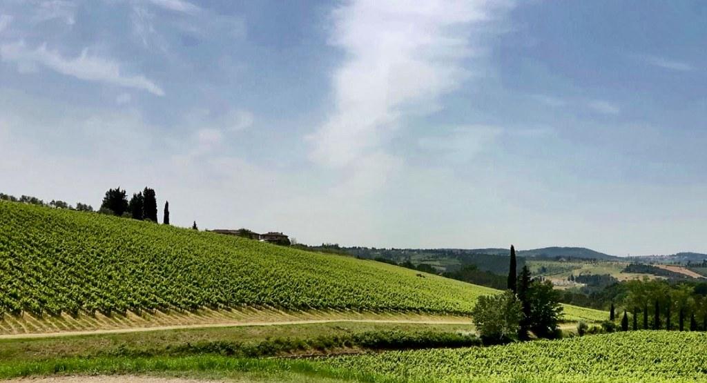 Vigneto nel Chianti - Vineyard in the Chianti