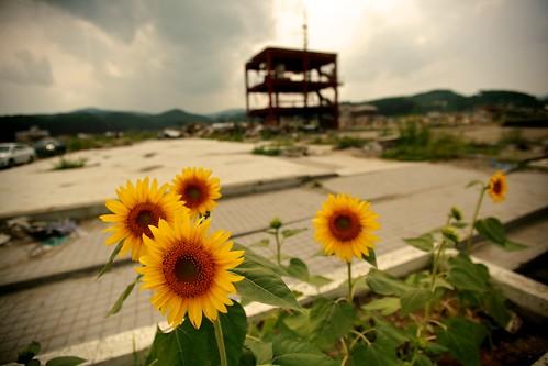 2011年8月16日 南三陸町志津川 防災庁舎前   by shiggyyoshida