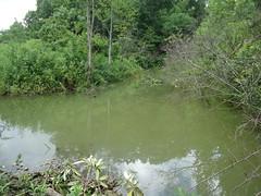 Sigmon Pond on 606