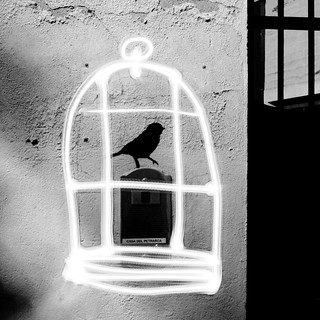 big bird in a small cage | by holia