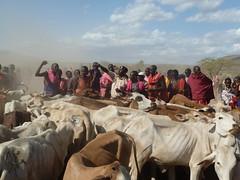 KENYA - Maasai Pastoralist Heritage
