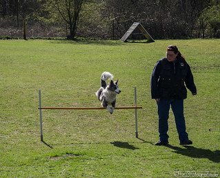 Hundesport 01.04.2012 | by Silbersurfer